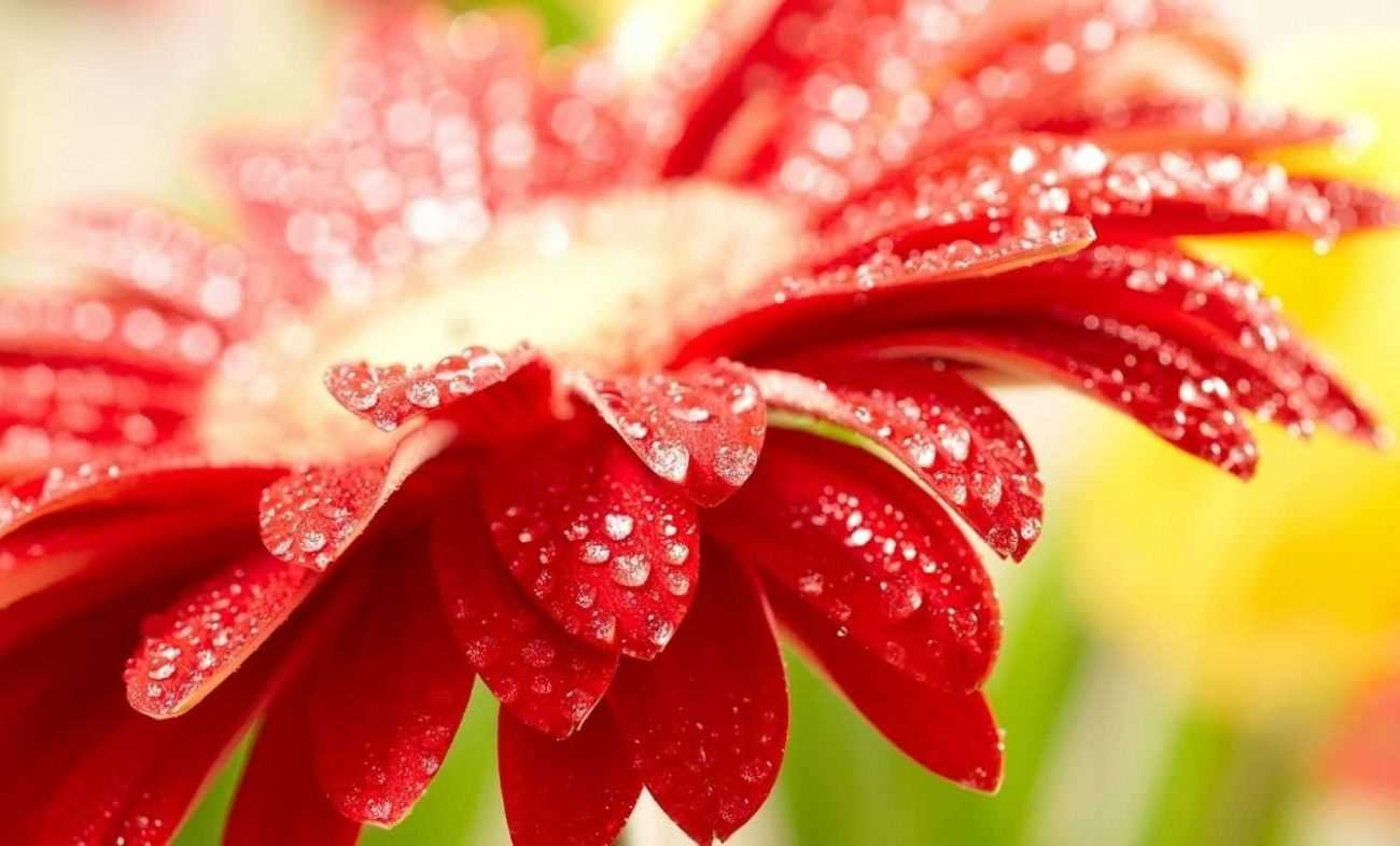 Animated Beautiful Flowers Wallpapers For Mobile Hd8x