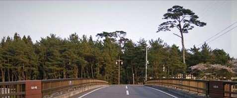 Rikuzentakata'daki ormanın yok olmadan önceki hali