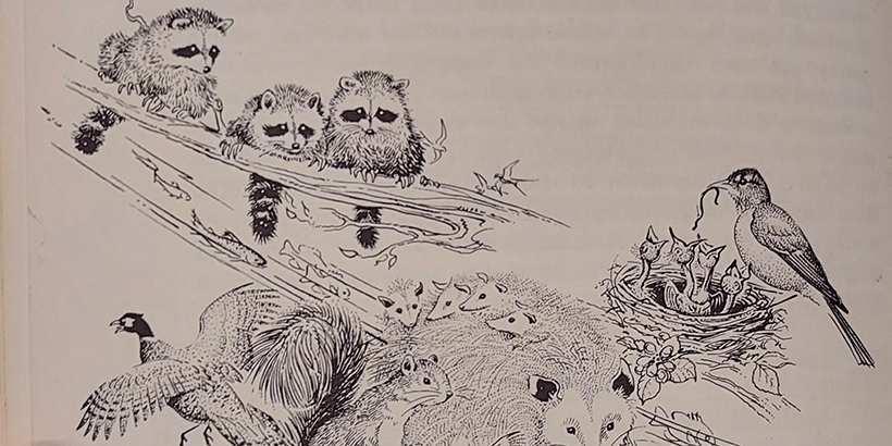 Kitapta yer alan bir çizim (2)