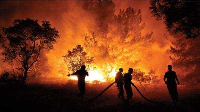 Ecologia do Fogo